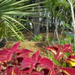 Charleston Lowcountry Charleston Landscape Charleston Sc Forevergreen Landscaping Forever Green Landscaping In Charleston Sc, Tree Service Charleston Sc, Valleycrest Landscaping, Greenery Charleston Sc, Valley Crest, Landscape Companies Charleston Sc