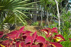 Charleston Lowcountry Charleston Landscape Charleston Sc Forevergreen Landscaping Forever Green Landscaping In Charleston Sc, Tree Service Charleston Sc, Valleycrest Landscaping, Greenery Charleston Sc, Valley Crest, Landscape Companies Charleston Sc
