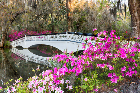 commercial landscape management, commercial landscaping management, commercial landscaping, charleston lowcountry charleston landscape charleston sc forevergreen landscaping forever green landscaping in charleston sc, tree service charleston sc, valleycrest landscaping, greenery charleston sc, valley crest, landscape companies charleston